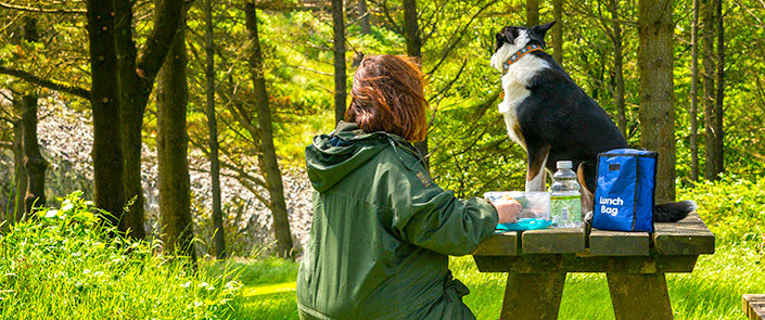 dog and pet friendly holiday cottages in snowdonia, north wales